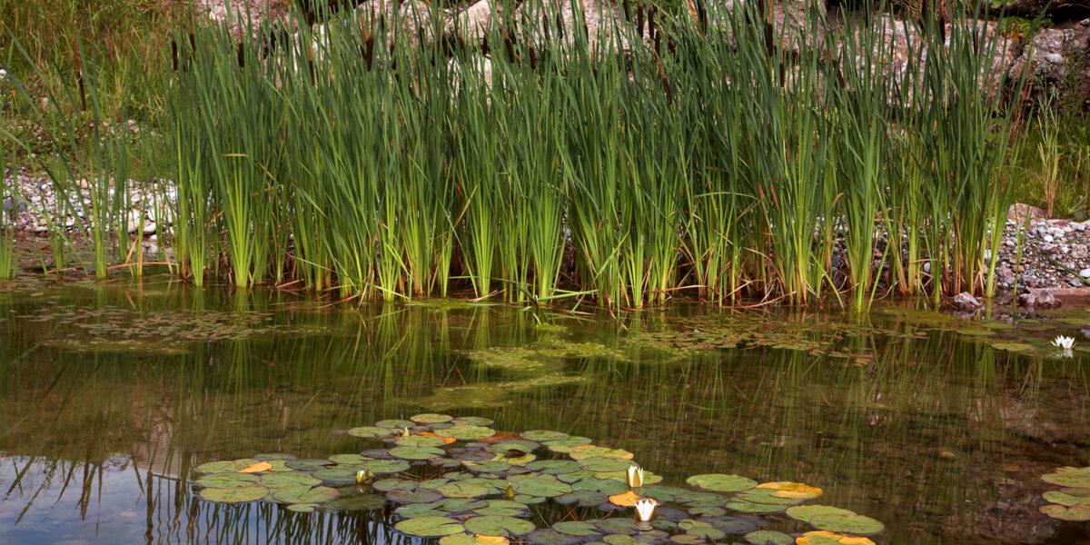 Amphibienteich