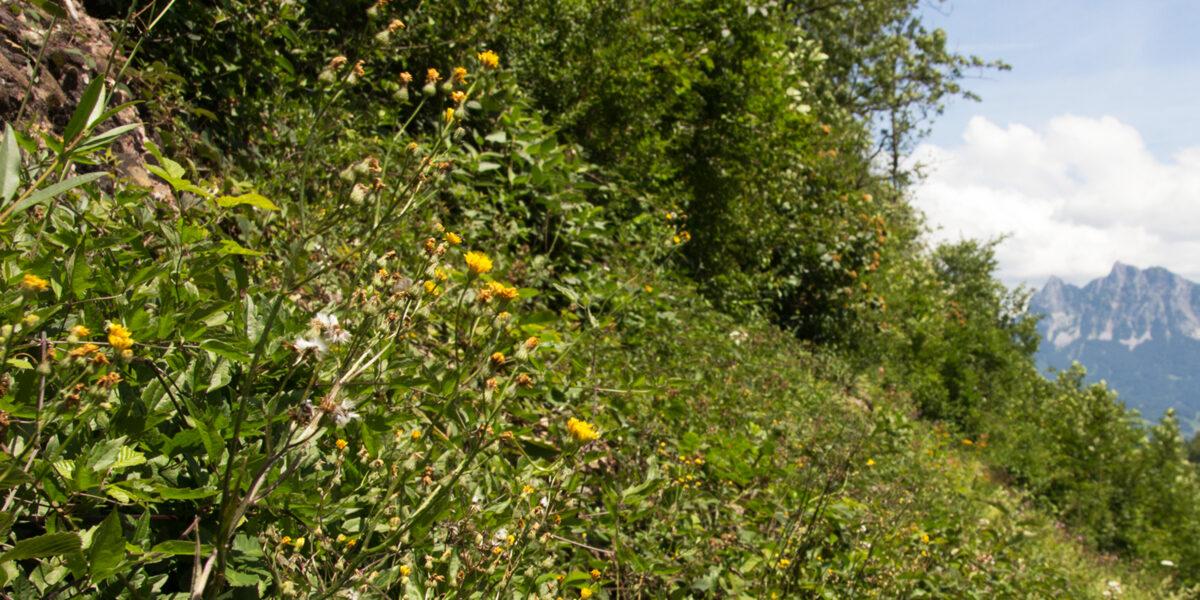 Naturschutzgebiet Depotweg Goldau
