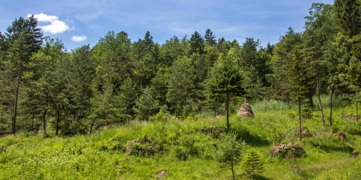 Naturschutzgebiet Hangried Goldau