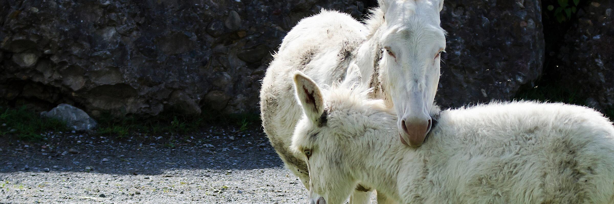Weisser Barock-Esel