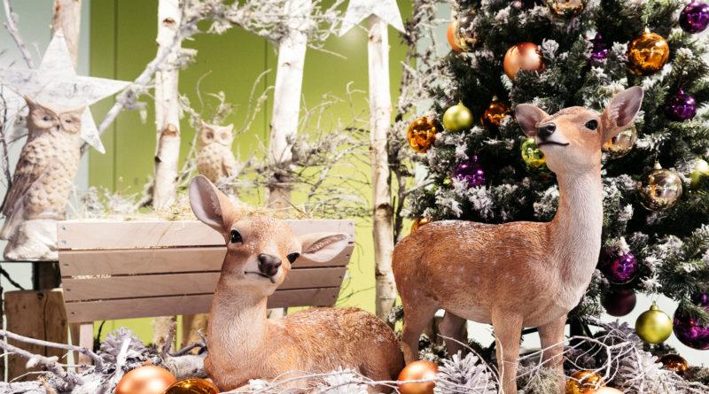 Weihnachten im Tierpark Goldau