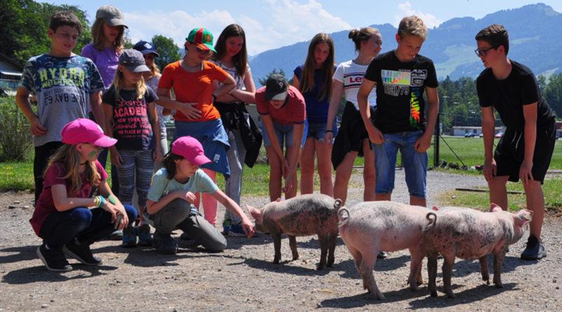 Tierisches Ferienprogramm