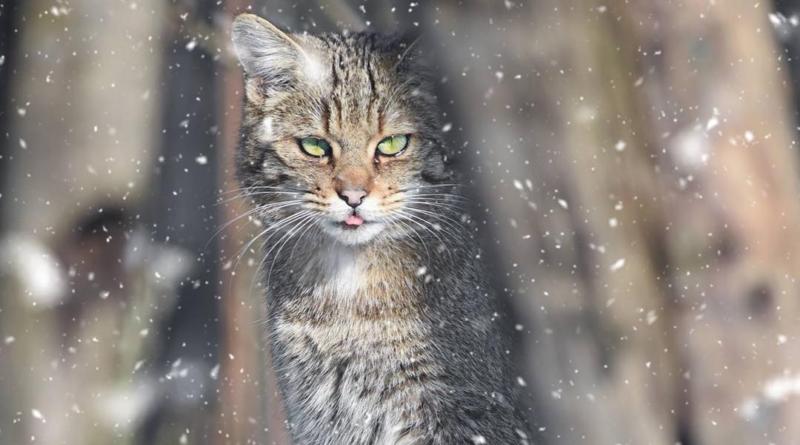 Wach im Winter, Siegerin Battle Nummer 1