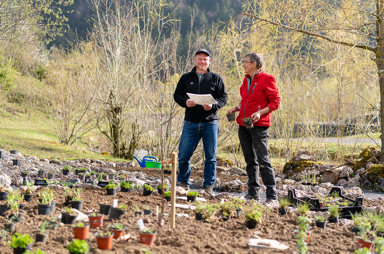 Die ausgewählten einheimischen Pflanzen wurden bereits im April gepflanzt.