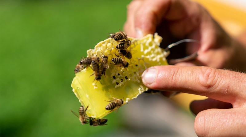 Bienen, Ferienprogramm im Tierpark